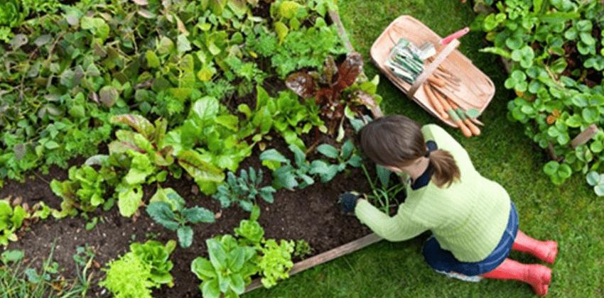 Bahçıvan